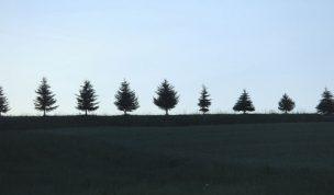 立木の相続税評価の実務