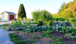 都市営農農地等の相続税の納税猶予