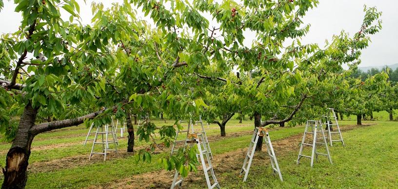 果樹等の財産の評価方法