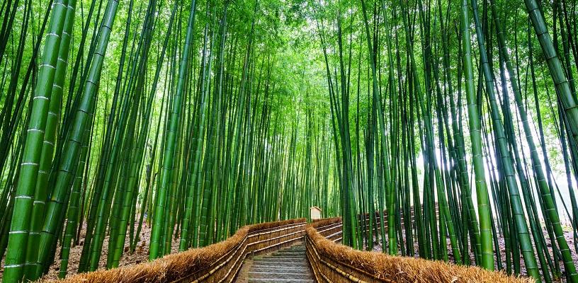 立竹木の財産評価