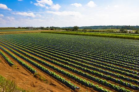 29年度改正の農地に係る相続税等の納税猶予の要件を緩和